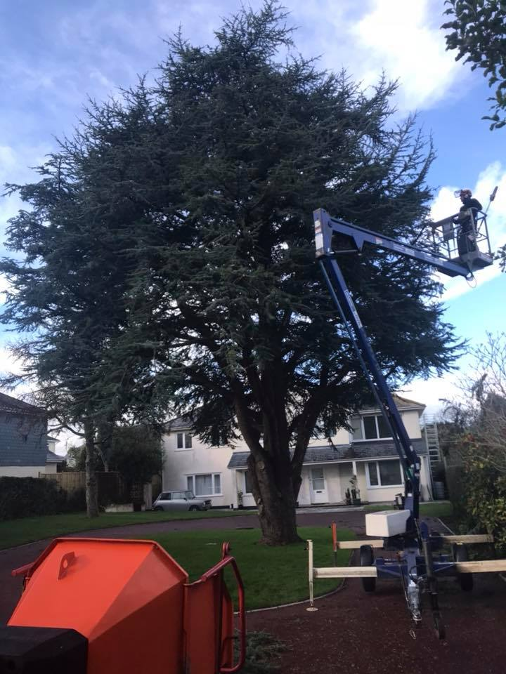 Advanced Tree Care - Tree Surgeons & Aborists in Torbay, Devon