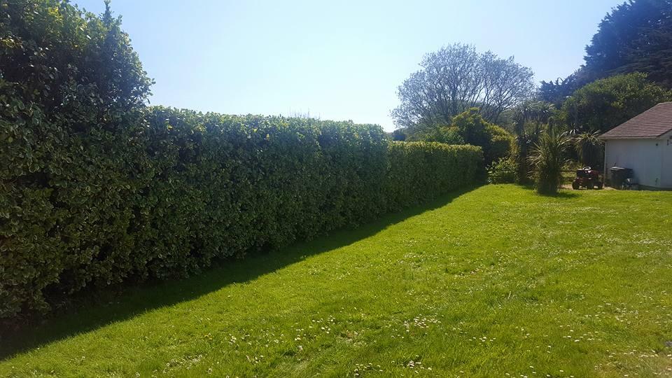 Advanced Tree Care - Tree Surgeons & Aborists in Torbay, Devon