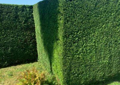 Advanced Tree Care - Tree Work